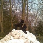 We are on top of the world. Giant Schnauzers need to explore, get exercise, learn and be with people.  Not a dog to just live in the back yard or be tied outside.  They want to be with you and work as a team.